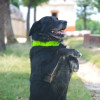 """OT is a search and rescue dog. He lost all his 5 siblings a"