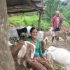 Today, I travelled to Gumthang, Sindhupalchowk and went goat
